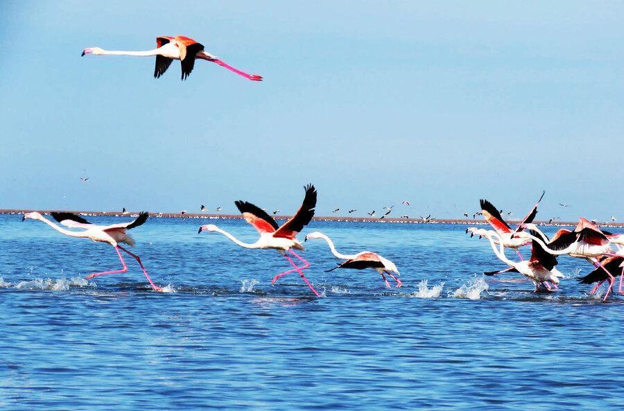 دولت روحانی کوتاه نمی آید ، استاندار گلستان: تنها جزیره دریاری خزر را منطقه گردشگری می کنیم