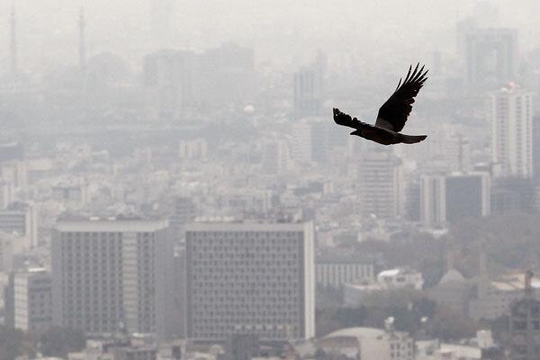 مدارس تهران دوشنبه تعطیل است ، اجرای طرح زوج و فرد از در منازل