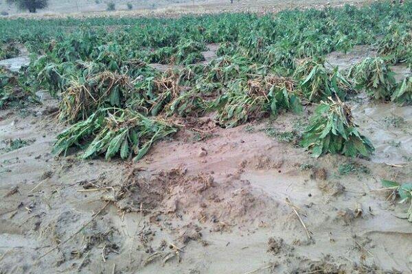 ابلاغ کمک بلاعوض 5.6 میلیاردی به کشاورزان خسارت دیده سیل گیلان